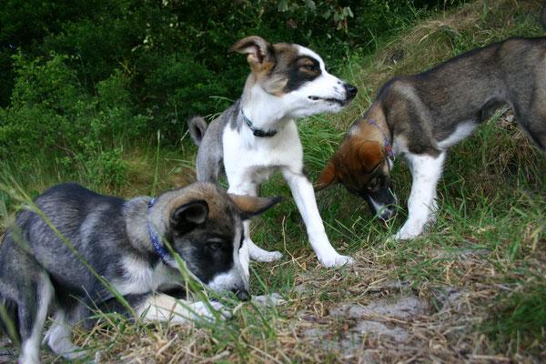 Tayler, Sitka und Kira