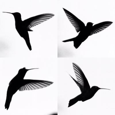 Kolibri-Kollage