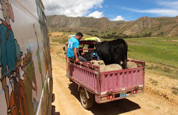 Peruanischer Viehtransporter