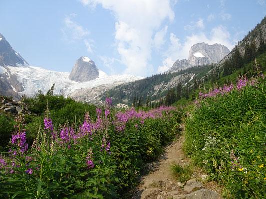 Blumenwiesen und Gletscher - was will man mehr?