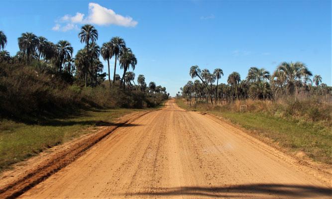 Straße im Nationalpark El Palmar