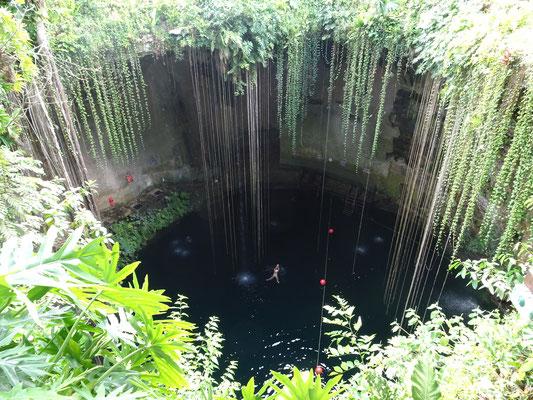 Schwimmen in einer Cenote - irgendwie unheimlich, wenn man weiß, dass das Wasser 50 m tief ist...