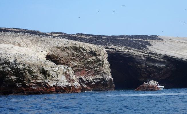 Die schwarze Fläche sind alles Seevögel