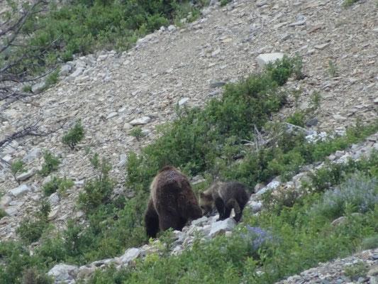Mutter-Grizzly mit Kindern 3