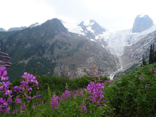 Blumenwiesen vor Gletscher