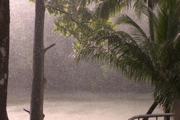 Regenzeit im Regenwald