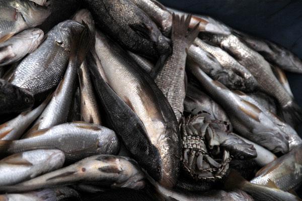 Im Spanischen ist Pez der Fisch im Wasser und Pescado der zubereitete Fisch auf dem Teller - hier haben wir eine  sehr frische Zwischenform...