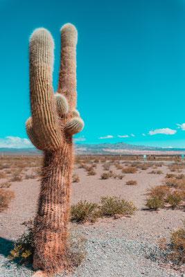 Tip: Ein hervorragendes Foto als Handy-Hintergund...