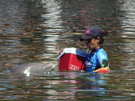 Delfin in einem Resort bei Playa del Carmen