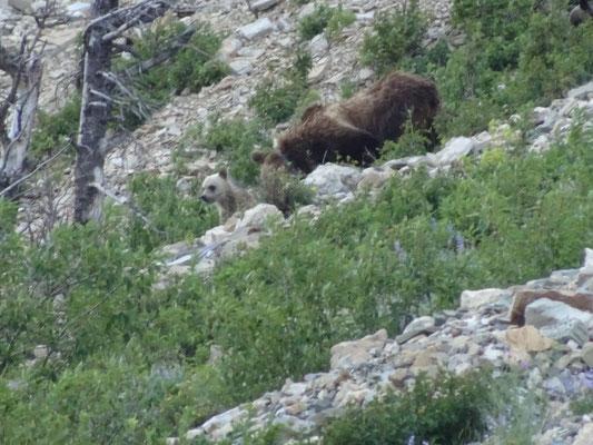 Mutter-Grizzly mit Kindern 4