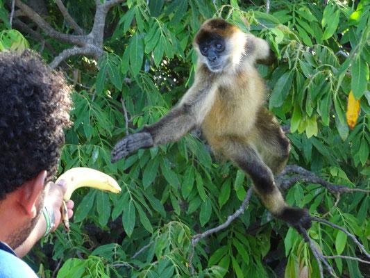 Eigentlich war die Banane mein Frühstück - wirklich!
