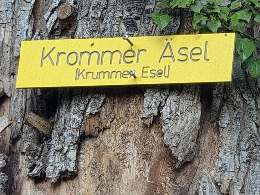 Krummer Esel (Kromme Äsel)