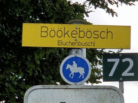 Buchenbusch