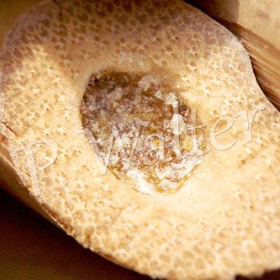 02.08.2014 : Nistverschluss einer Löcherbiene (Harz und außen drauf noch Steinchen oder andere Partikel)