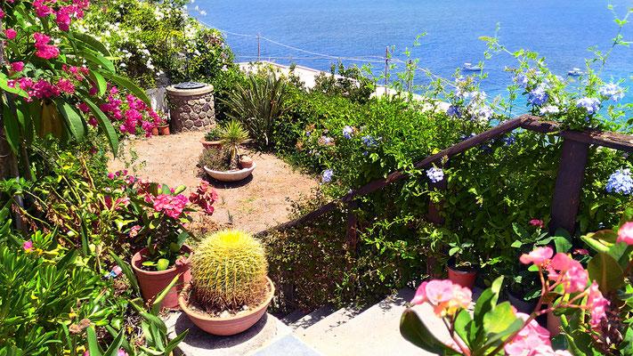 Giardino D / D garden