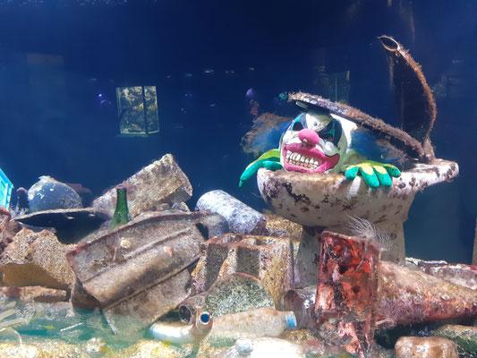 Im Aquarium des Ozeanographischen Museums
