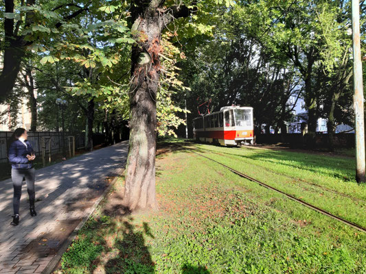 """Straßenbahn an der """"Festival-Allee"""", Kaliningrad"""