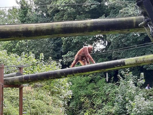 Im Zoo von Jersey