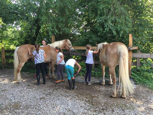 Kinderreitwochen 2018 Kinder Pferdepflege Haflinger