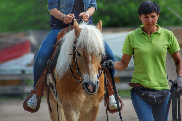 Peer.tv Filmaufnahmen Haflinger Pferd Priska Kelderer Reitplatz