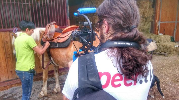 Peer.tv Filmaufnahmen Haflinger Pferd