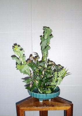 松尾雅雪 菜の花 アストロメリア ドラセナ