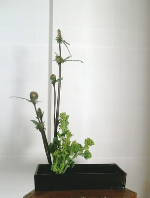 河本珠実 ゼンマイ 菜の花