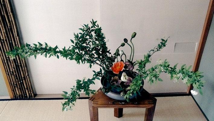 川上雅櫻 コデマリ ポピー クリスマスローズ