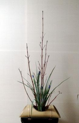 北條雅姫 珊瑚水木 アイリス