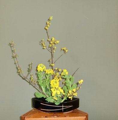 川上雅櫻 連翹 菜の花