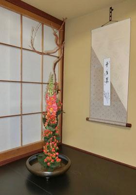 水谷雅由 石化柳 ヒペリカム 金魚草