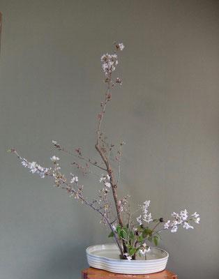 北條雅姫 桜 芍薬