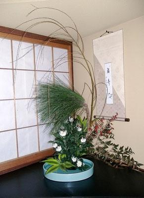 水谷雅由 大王松 六角柳 南天 菊 ドラセナ