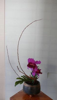 雅柔   カトレア 六角柳