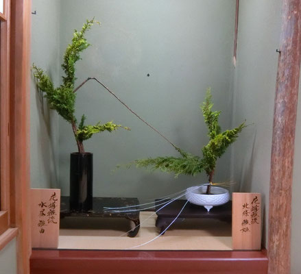 富士生け 孔雀檜葉 しのぶひば 水谷雅由 北條雅姫