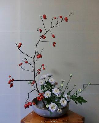 河本珠実 鈴ばら 菊
