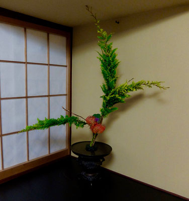 水谷雅由 孔雀檜葉 葉牡丹 ピンクッション