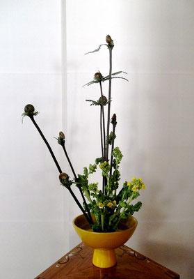 塩谷珠里 ゼンマイ 菜の花