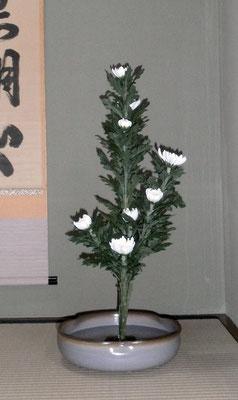 北條雅姫 菊