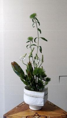 水谷雅由 オーニソガラム 手毬草