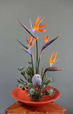 河本珠実 バンクシアフーケリアナ 極楽鳥 エリンジューム