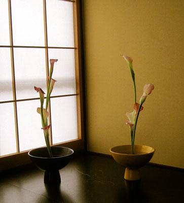 カラー生花