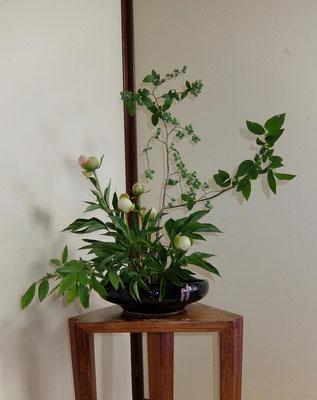 川上雅櫻 芍薬 プルーベリー