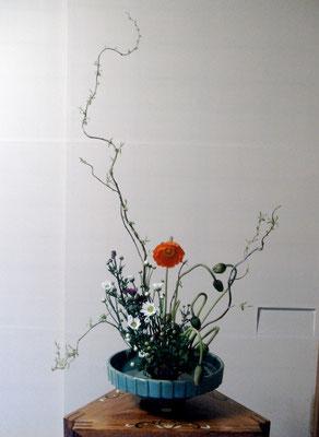 松尾雅雪 雲竜桺 ポピー 小菊