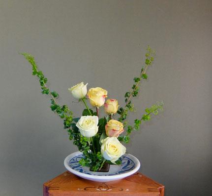 河本珠実  メガネ柳 バラ