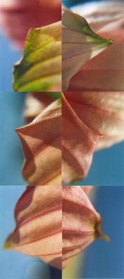 "Maruska Mazza, "" Flowers compositions"", analogic photography, 2003"