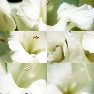 "Maruska Mazza, "" Flowers compositions"", analogic photography, 2003"