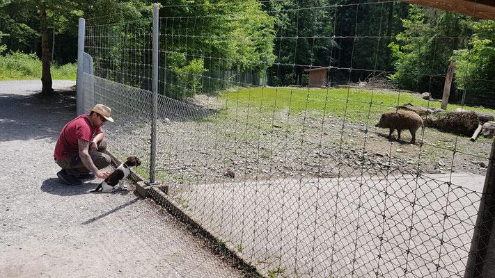 Gaya: Herrchen ist Wildhüter in Zürich