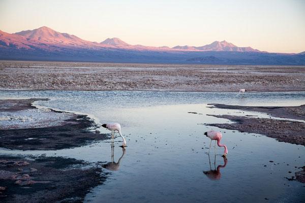 Lago Chaxa