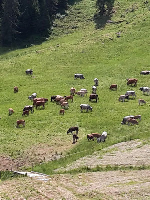 ...unser Vieh auf der Alp...